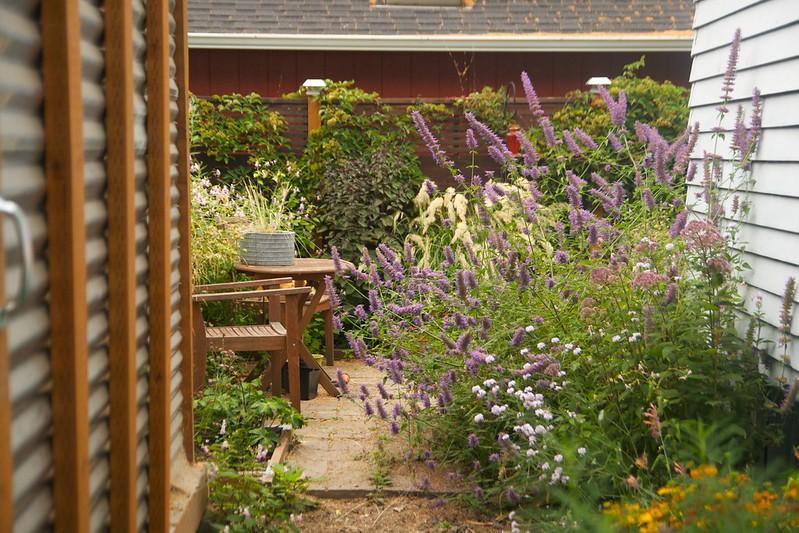 backyard fron driveway  3411