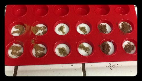 Rice cake experiment: cinnamon, anise, cocoa