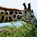 Uganda_T2_104-DSC_0406 by Jordi Riba Aparicio