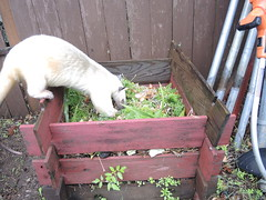 Checking the compost