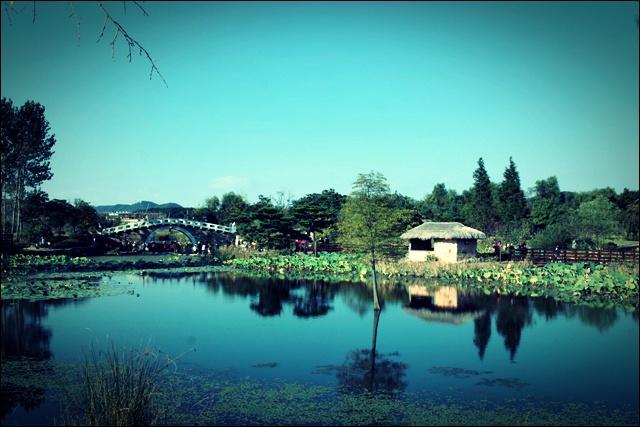 연못-'제 10회 드림파크 국화축제'