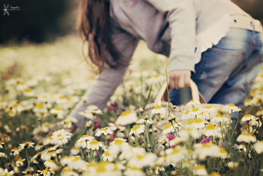 Recolectando primavera para Litel Pipol ... 19/19