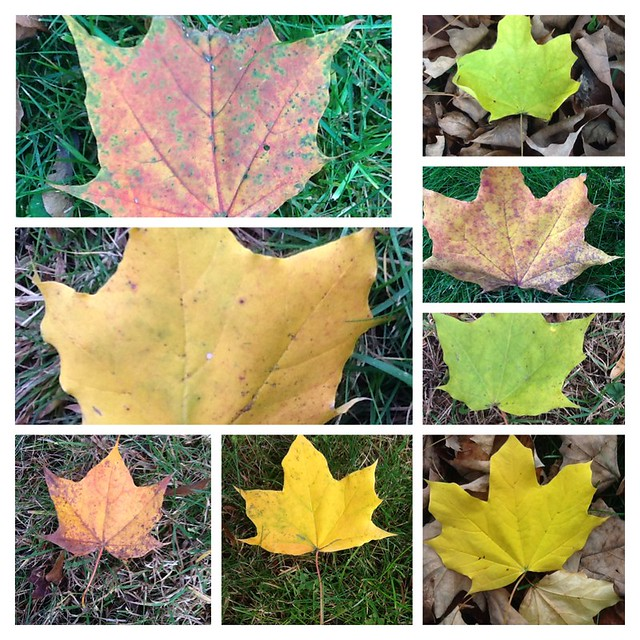 New England Leaf Collage