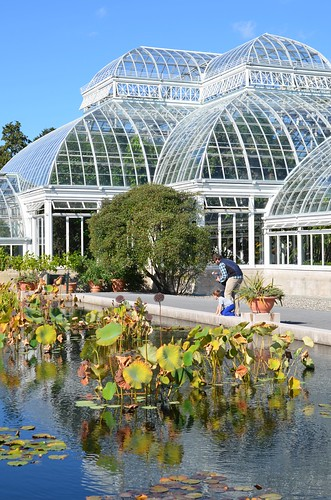 The Lily Pond And The Conservatory