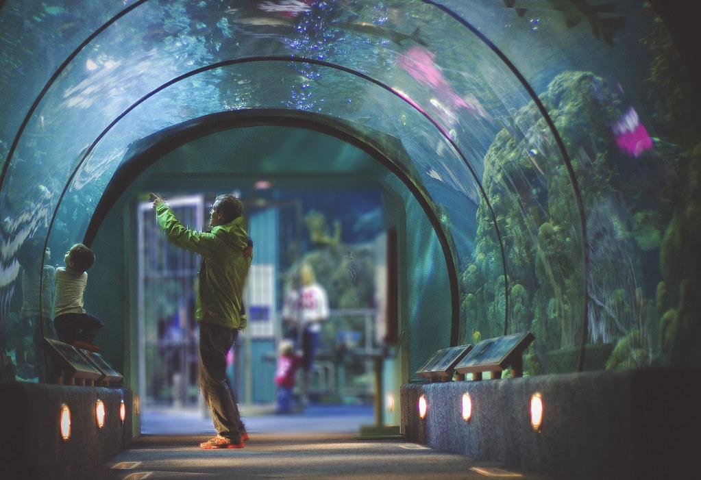 aquarium_71