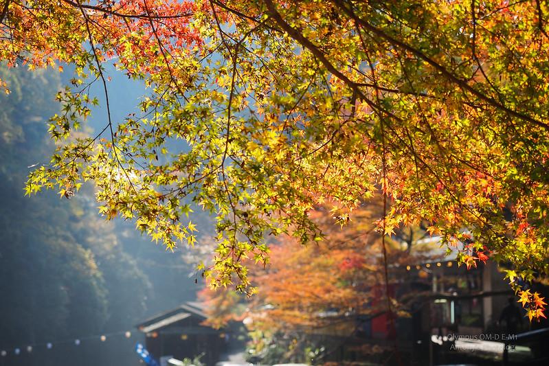 神護寺表參道 | 京都高雄