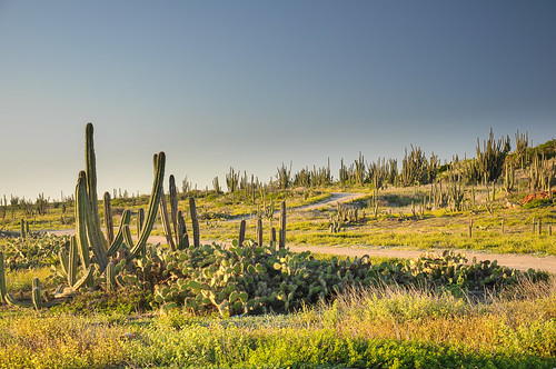 sunset cactus atardecer aruba tuna netherlandsantilles antillasholandesas flickrtravelaward