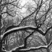 Snow and Branches