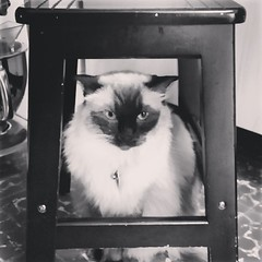 Taco insists he was innocent... He was framed!!