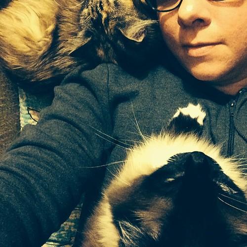 Snugglefest! #wyllastout #charlenebutterbean #cat #kitten #ibkc