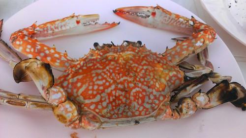 Koh Samui Local Seafood -Bangpor Seafood