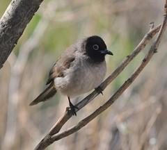 nightingale(0.0), emberizidae(0.0), house sparrow(0.0), brambling(0.0), animal(1.0), sparrow(1.0), branch(1.0), fauna(1.0), finch(1.0), junco(1.0), beak(1.0), bird(1.0), wildlife(1.0),
