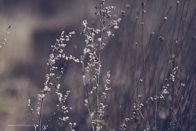 Un paseo en silencio