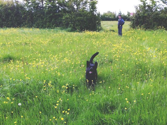 10 the finer things club lifestyle blog uk dog walk