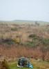 Culloden Moor-5886