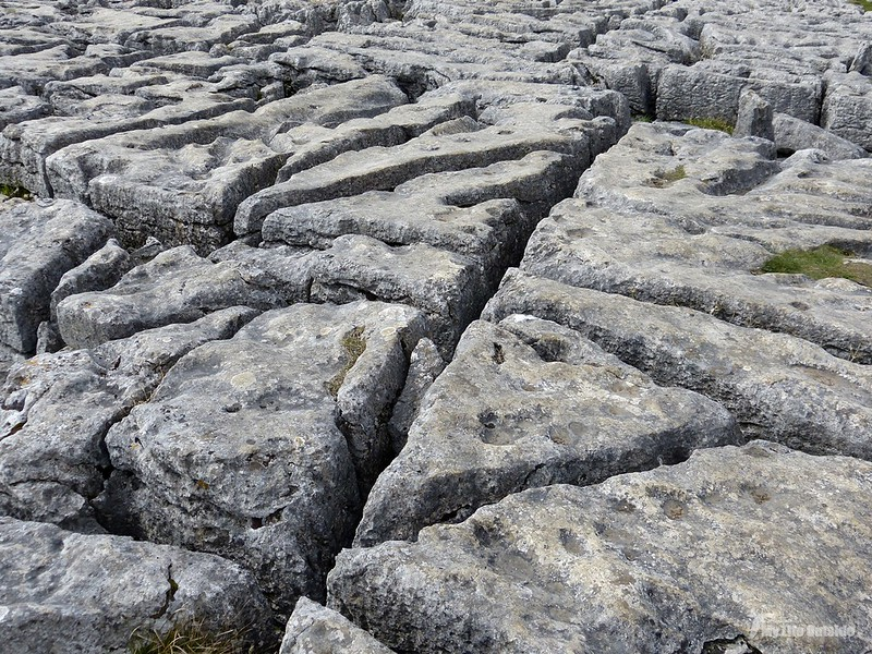 P1070593 - Limestone Pavement, Malham Cove