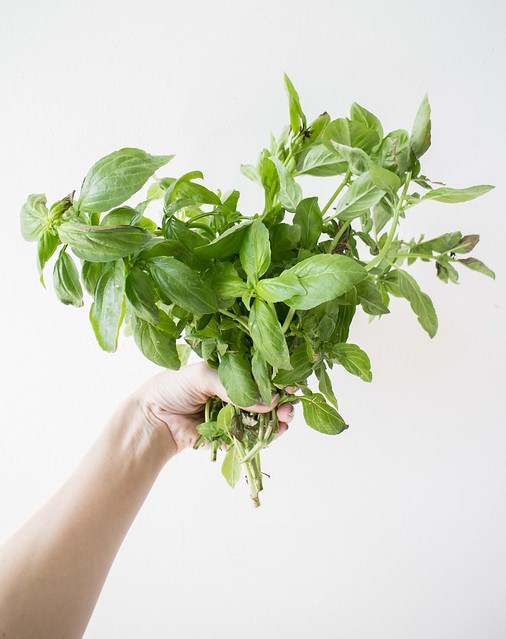 Aero Garden Basil