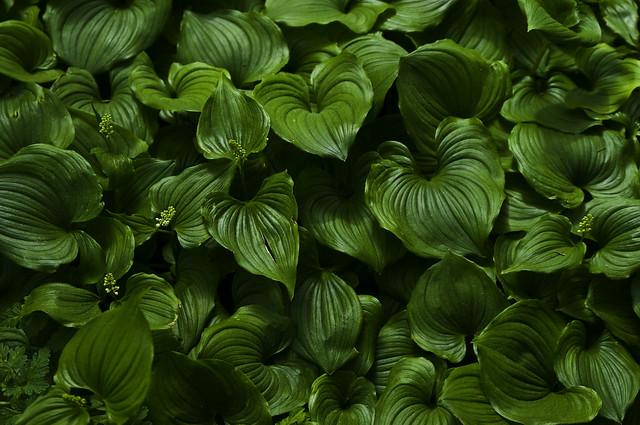 seeing green PT