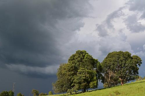 storm australianstorms australianweather tamborinemountain sky cloudscape thunderstorm trees sunlight sequeensland queensland australia mounttamborine