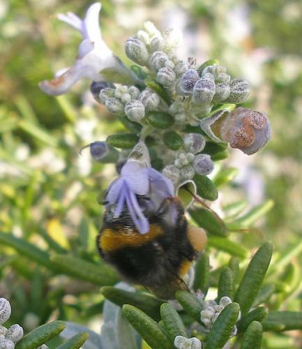 worker with pollen