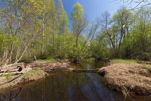 nature river spring loodus jõgi kevad kohtru