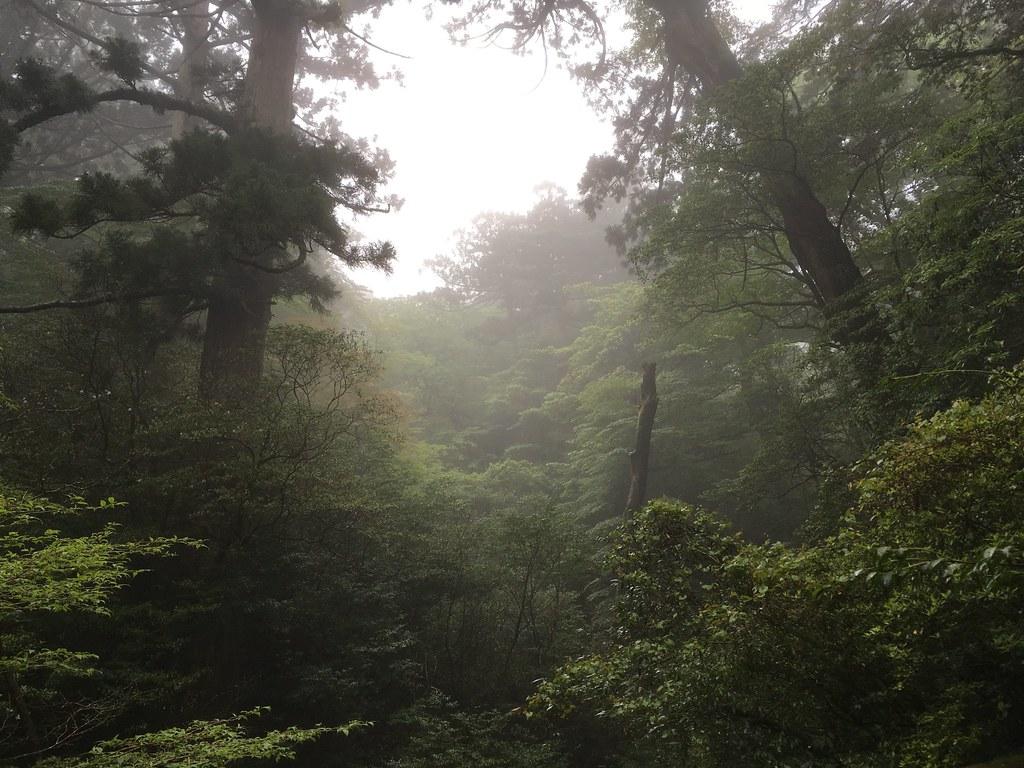 昼飯スポットの広い空間に立ちこめる霧