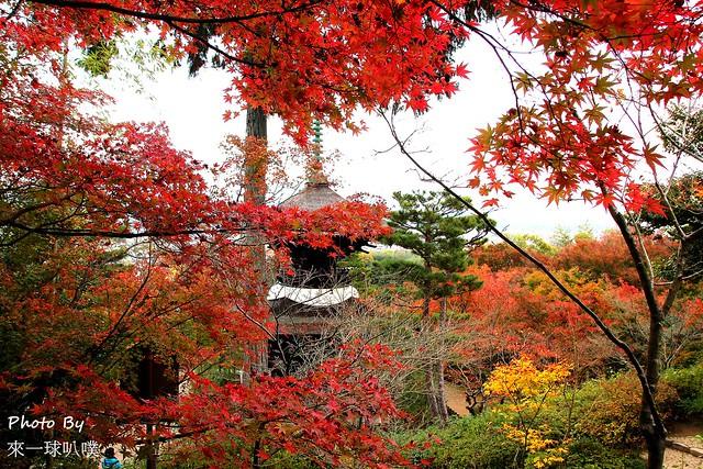 嵐山旅遊景點-常寂光寺45
