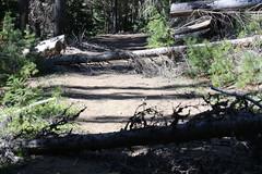 Mesatchee Creek Falls Hike