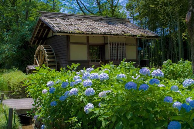 2016/06/18_郷土の森-61