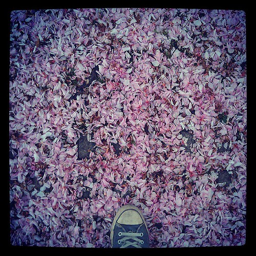 some trees cry #pavement #spring #pink #converse #brussels