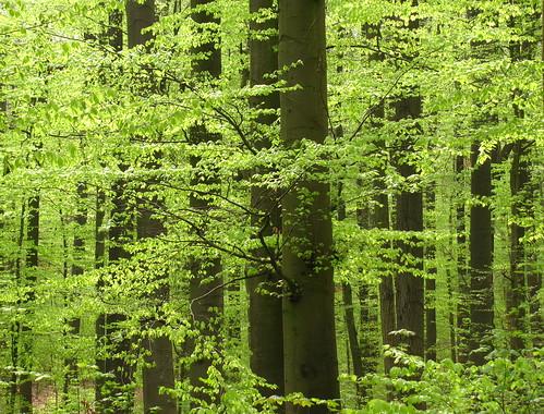 park flower forest germany deutschland thüringen thuringia wildflower wald hainich germancute
