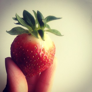 The fruit of our labour : First strawberry of the season! We've been watching it closely so the animals don't get at it, even covered it with leaves. This morning it was ripe for the picking