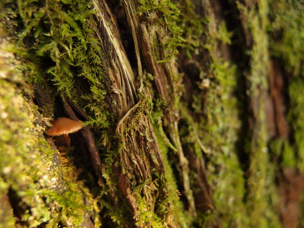 20130716_mushroom