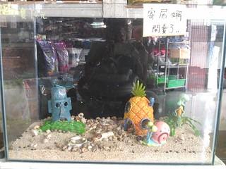 內埔店家賣的寄居蟹。