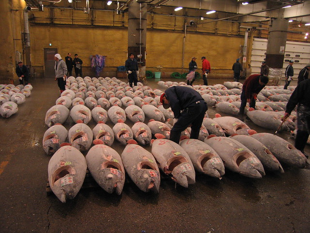 Tsukiji_Fish_market_and_Tuna