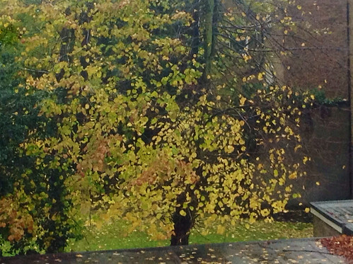 Through the window, few leaves remaining make it an impressionist image. width=