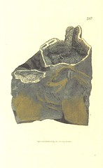 """British Library digitised image from page 352 of """"British Mineralogy: or coloured figures intended to elucidate the mineralogy of Great Britain. By J. Sowerby (with assistance) . F.P"""""""