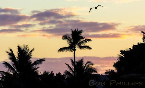 gulfofmexico clouds sunrise florida pelican palmtrees pineisland bokeelia