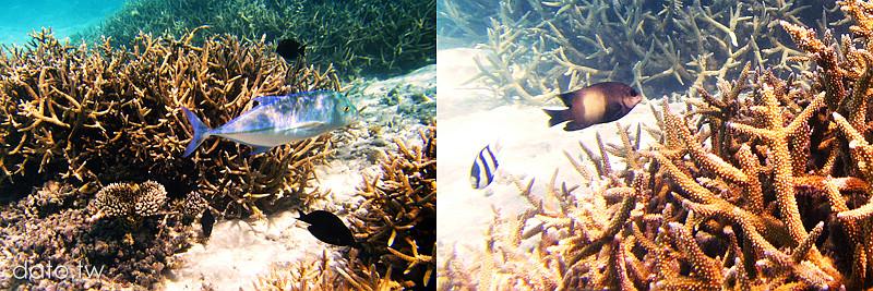 馬爾地夫,浮潛,maldives