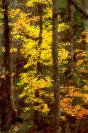 autumn trees ny color fall forest woods monroe webster irondequoit photosketch