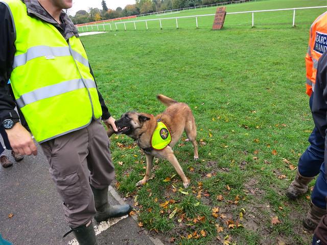 Image Result For Diy Dog Training