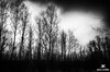 Spring Dusk in Black and White by Jim Crotty