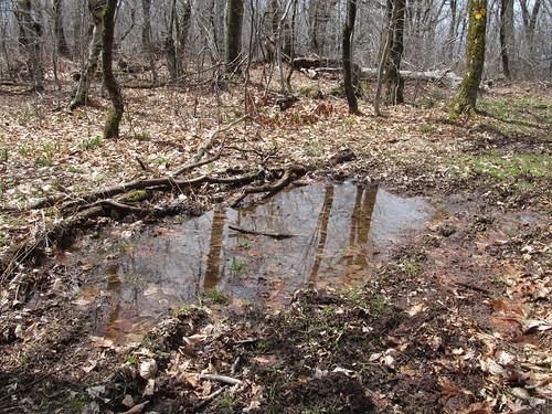 Soggy trail