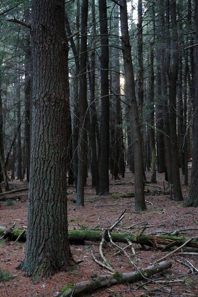 Bartley Mountain - Pennsylvania