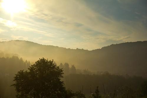 morning trees sun fog forest germany bavaria hüttenbach simmelsdorf
