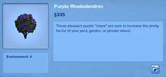 Purple Rhondodendron