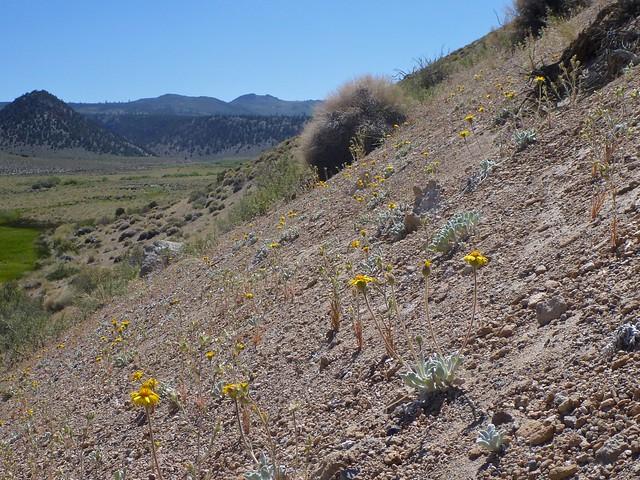 pumice hillside
