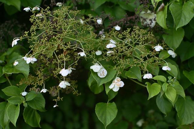 Bush Blossom