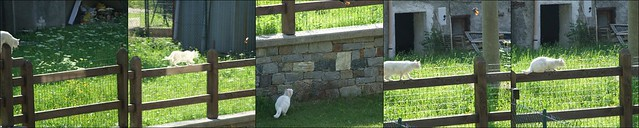 Collage gatto
