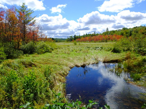 sky clouds landscape leaf woods fallcolors scenic foliage wetlands aki leafs fayette forêt lautomne elotoño dailynaturetnc12 elfollaje camerapicofthedayfinepix mainemainerong58usaimagessummerpicturesphotoofthedaydayimagecolorphotographypicturestravelphotophotosphotosusauslighttripfugifilmpicturecolordigital hs50exrphotographexplorationnewlivegeotaggednatureforestmorila